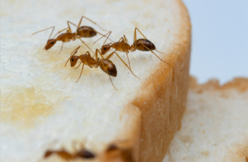 How to get rid of stored product insects?
