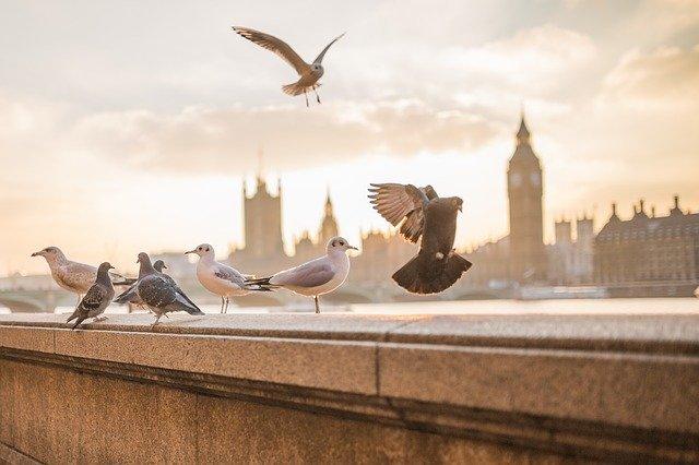 Even Top Landmarks Have London Pests