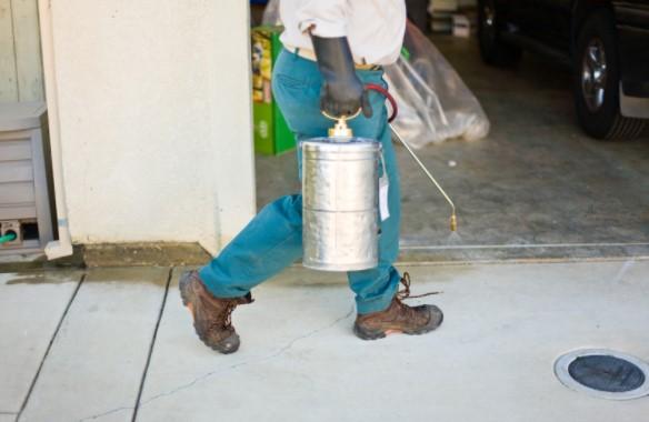 Pest Control Chalk Farm NW3