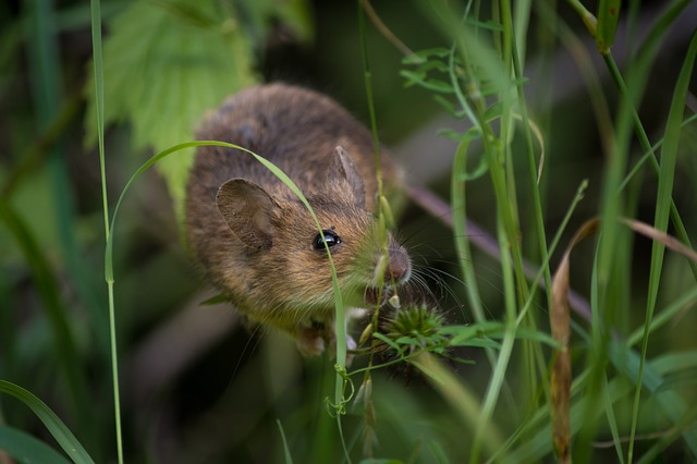 a mouse living in a house garden