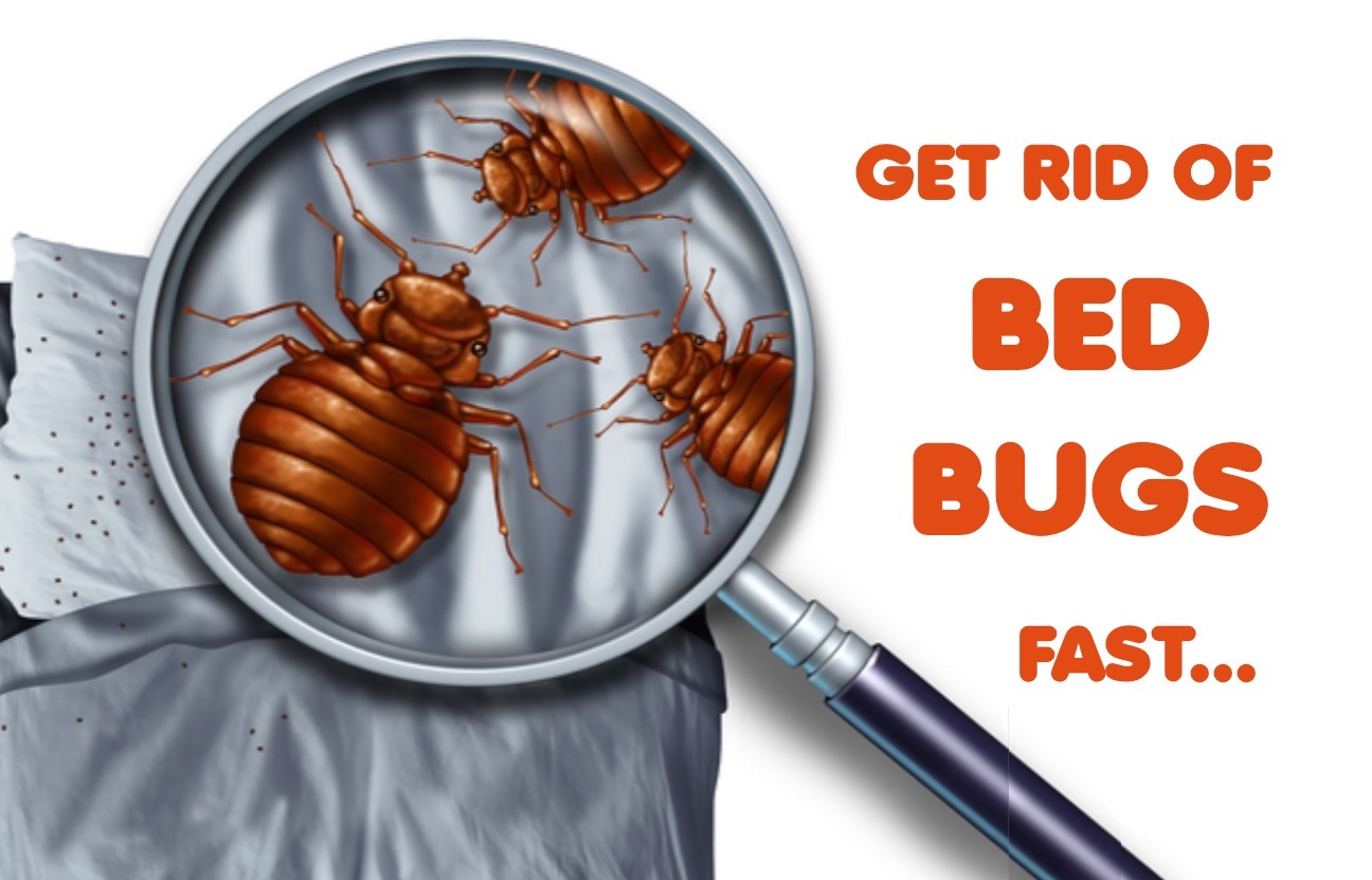 Bed Bug Life Cycle Explained