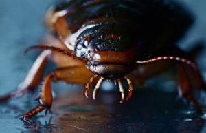 identify garden beetles