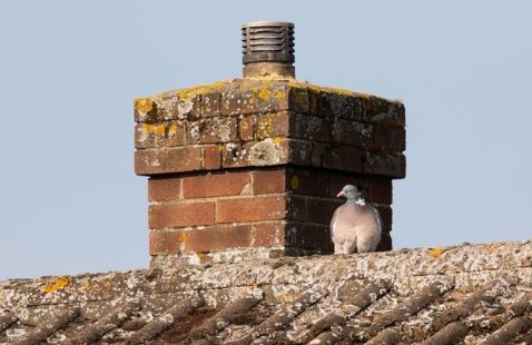 7 Signs You Need Birds In Roof Removal